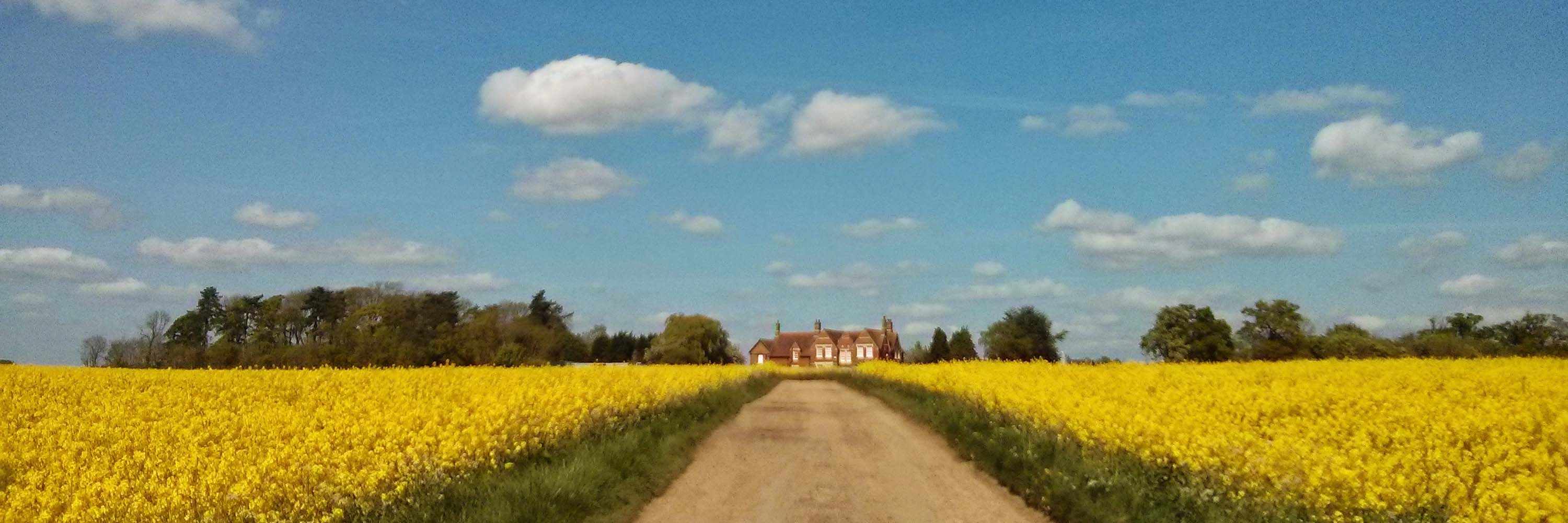 The Drayton Estate, Northamptonshire, Rapeseed Field
